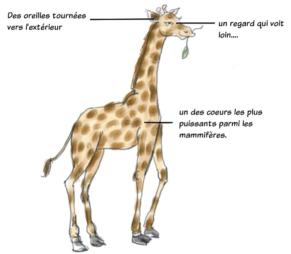 girafe2.jpg