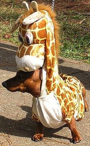 chien-girafe.jpg