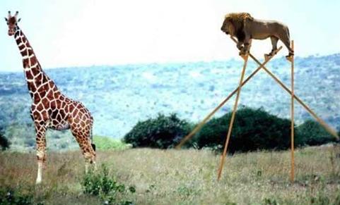 lion-et-girafe.JPG